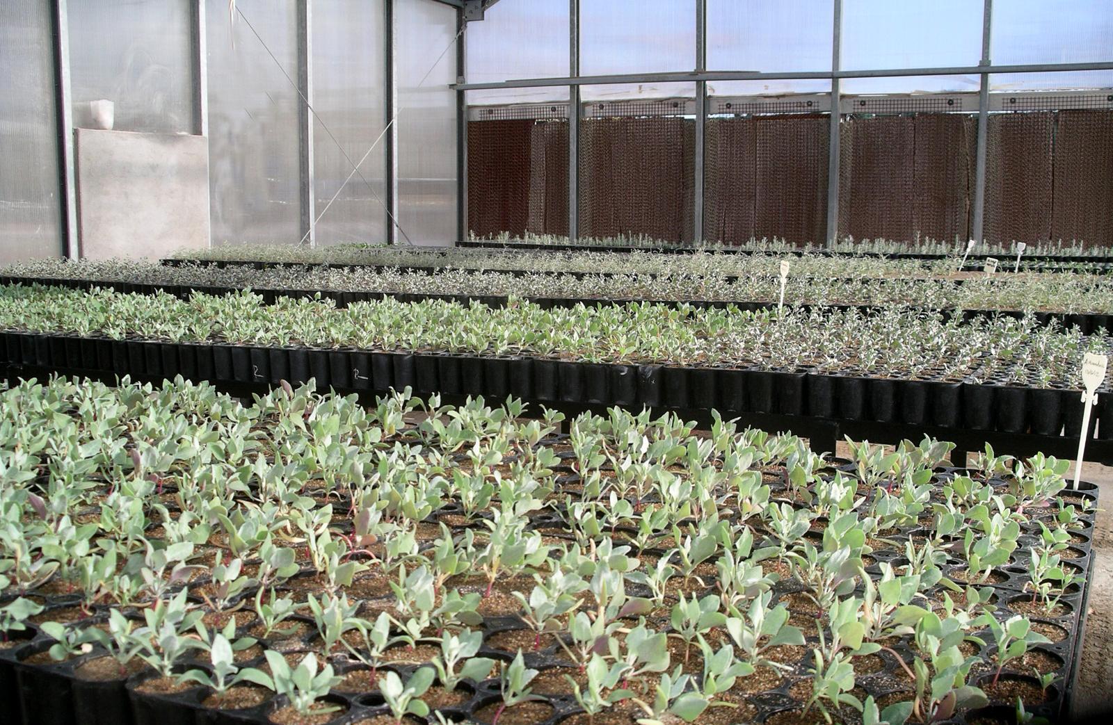 Con un hongo como agente de crecimiento mejoran la for Produccion de viveros