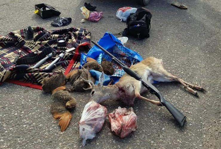 fa6a37757a3d2 San Luis: preocupación oficial tras la brutal caza de un puma y un ...